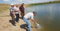 Kırklareli'nde 44 bin sazan balığı yavrusu göletlere bırakıldı