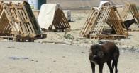 Kayıp 300 köpek için suç duyurusu