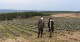 Lavanta Kırklareli'nin turizmine katkı sağlayacak
